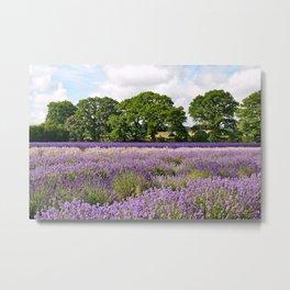 Hampshire Lavender Fields Metal Print