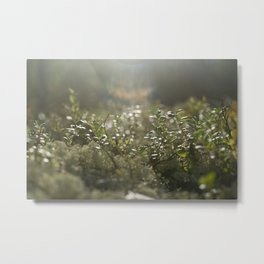 Sunlit Forest Carpet Metal Print