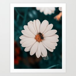 Hit The Target || Bee Floral Photography Art Print