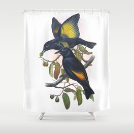 Rawnsley's Bowerbird, bird in the nature of Australia Shower Curtain