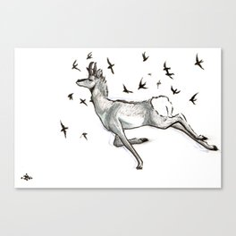 Swift (swifts and pronghorns, speed and survival in nature) Canvas Print