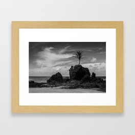 Coconut tree on the rocks, Tambaba beach, Conde PB Brazil Framed Art Print