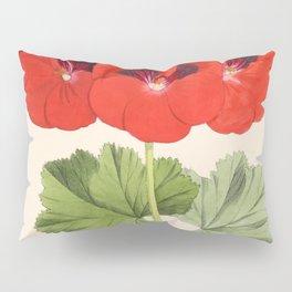 Pelargonium Edward Perkins Vintage Floral Scientific Illustration Pillow Sham