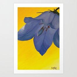 Parry's Bellflower Art Print