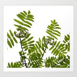 Green Rowan Leaves White Background #decor #society6 #buyart Art Print