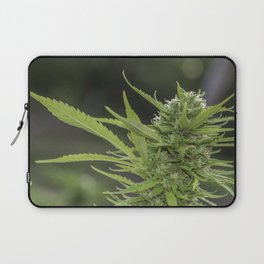 Cannabis 1 Laptop Sleeve