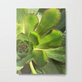 Green flower, Sacculent, water drops, dew Metal Print