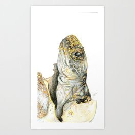 Hatchling turtle Art Print