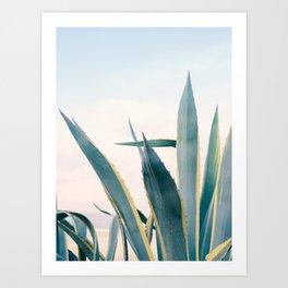 Coastal Agave Cactus Art Print