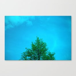 One Tree, Center stage.  Canvas Print