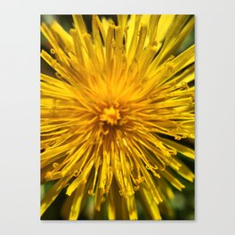 Yellow Love Canvas Print