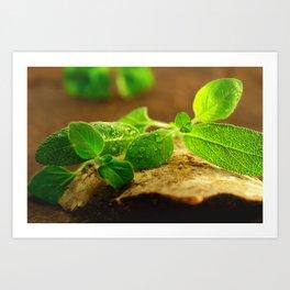 Sage leaves Natura Art Print