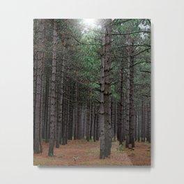 Endless Pines Metal Print