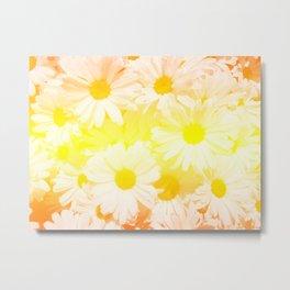Sunshine Daisies Metal Print