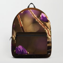 Hepaticas in The Glare Of The Sun  Backpack