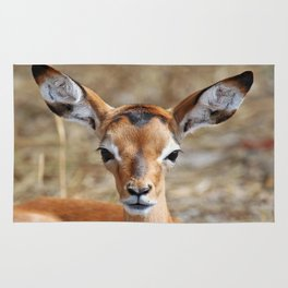 Very young Impala - Africa wildlife Rug
