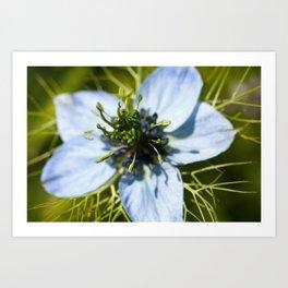 Nigella Flower Art Print