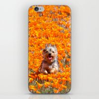 minnie iPhone & iPod Skins featuring Yorkie in Poppies by Sue Liberto Photography