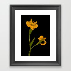 Wild Summer Iris II Framed Art Print