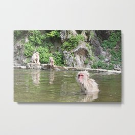 Bathing Monkeys in Japan Metal Print