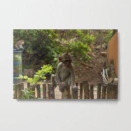 Wise baby monkey Metal Print