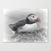 puffin Canvas Prints featuring Puffin by Lynn Bolt