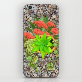 Flowering Crassula Perfoliata iPhone Skin