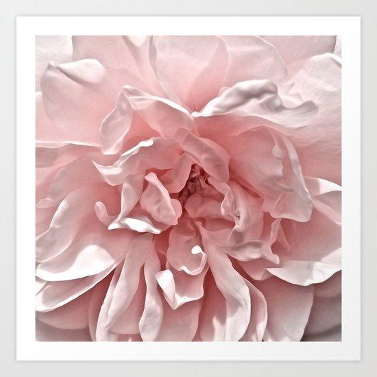 Pink Blush Rose Art Print