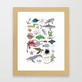 Under the Sea Alphabet Framed Art Print