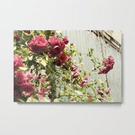Vintage Rose III  | Pastel Color | Street Photography | Flower Photography | Fine Art Photo Print Metal Print