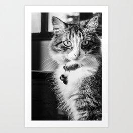Cat Sofia 2 Art Print