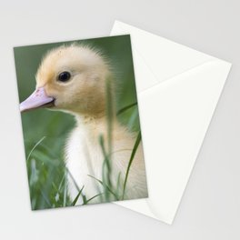 Muscovy duck's duckling on grass Stationery Cards