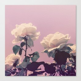 Vintage Spring Pearl White Roses Lavender Sky Canvas Print