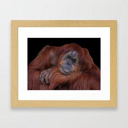 Unconcerned Male Orangutan Framed Art Print