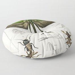 Grasshopper of six points (Locusta sexpunctata) illustrated by Charles Dessalines D Orbigny (1806-18 Floor Pillow