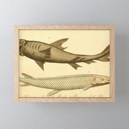 Vintage Print - Bullock's London Museum & Pantherion (1812) - Hammerhead Shark; Pike Framed Mini Art Print