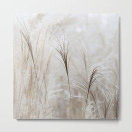 Light Neutral Soft Ornamental Grasses Metal Print