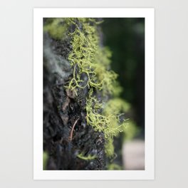 Growing and reaching for more Art Print