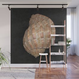 Sea Shell Wall Mural