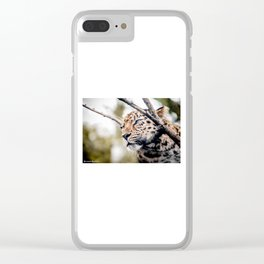Love Panther IV Clear iPhone Case