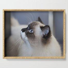 Ragdoll Cat Serving Tray