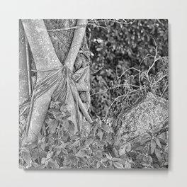Strangler fig and boulder in the rain forest Metal Print