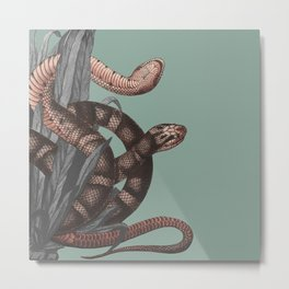 Snakes (animals collection) Metal Print