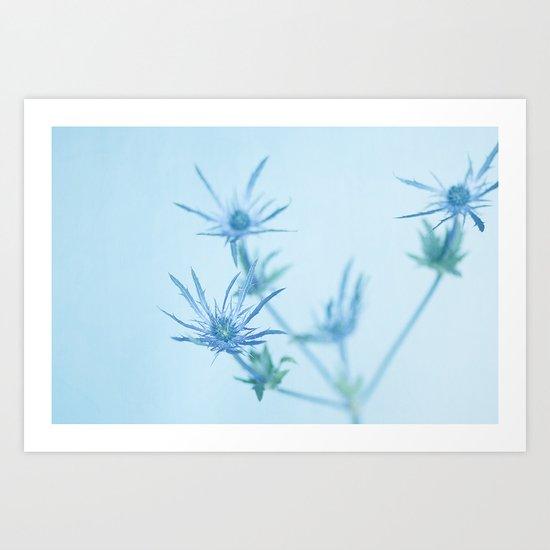 Blue Thistle Art Print