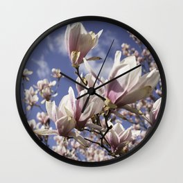 Magnolia Blossoms Shiver Against A Chill Wind Wall Clock
