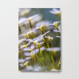 Bluets in the wind Metal Print
