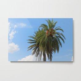 Palm Trees of Florida Metal Print