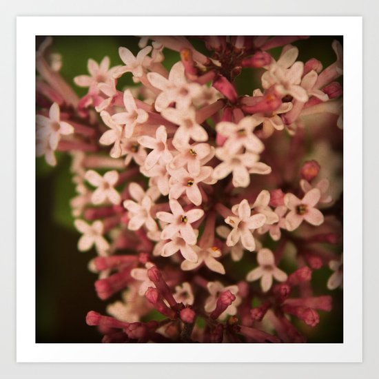 Sweet Lilac Breeze Art Print