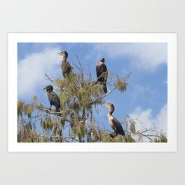 Cormoran Tree Art Print