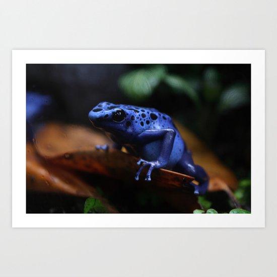 Blue Poison Dart Frog Azureus Art Print